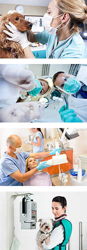 Radioprotection dentaire et vétérinaire