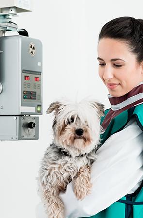 Radioprotection vétérinaire - Vos obligations